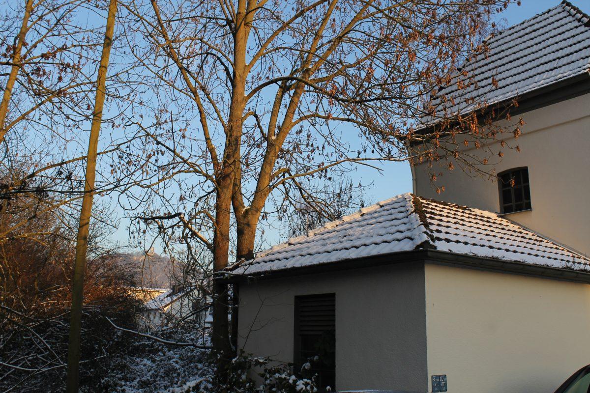 Kunigunde im Dezember 2012.